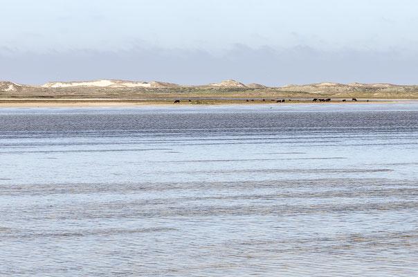 Lagune bei Agger Tange