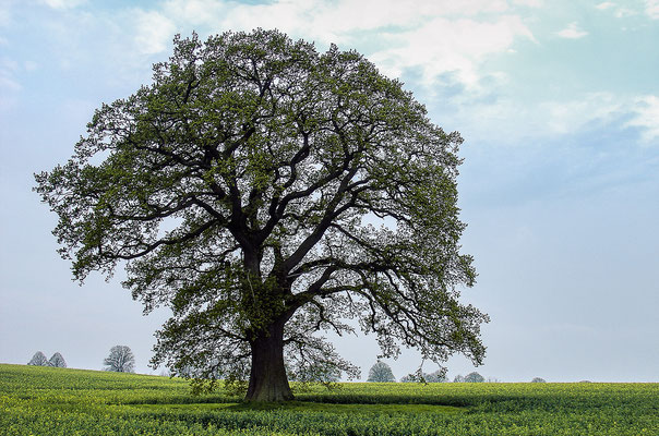 Extensiv genutzte Ackerflächen: Platz für Kraniche und Baumriesen