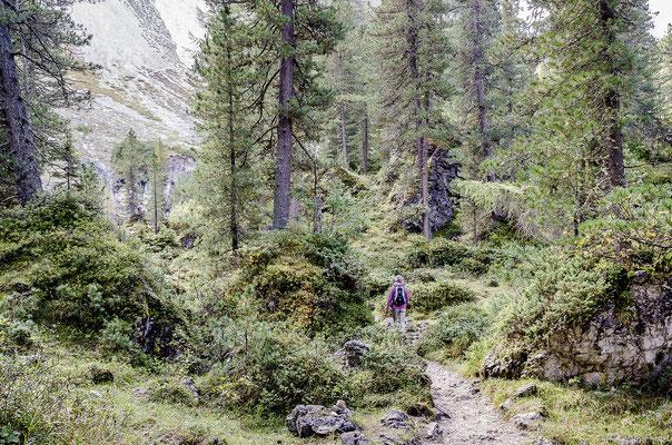 Uriger Wald im Naturpark Puez-Geisler