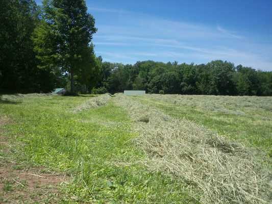 First cut haying June 24, 2019 at Berry Best Farm.