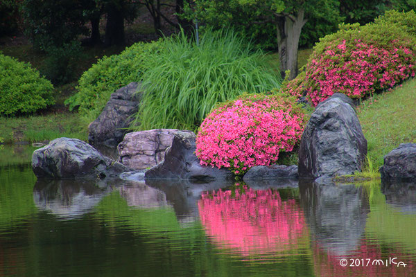 サツキの咲く池