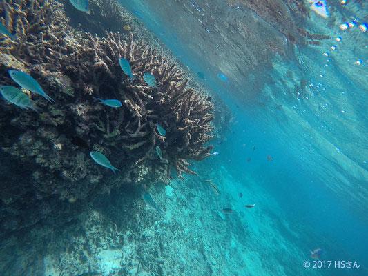 八重干瀬の珊瑚礁の境目(静岡県HSさん撮影)