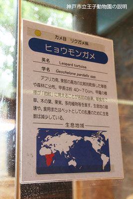 ヒョウモンガメの説明(神戸市立王子動物園)