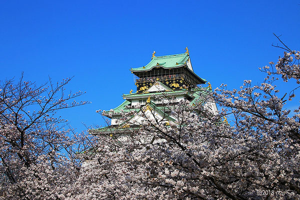 大阪城公園のお花見①