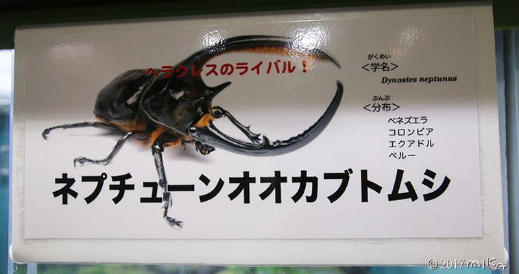 ネプチューンオオカブトムシの看板(伊丹市昆虫館)