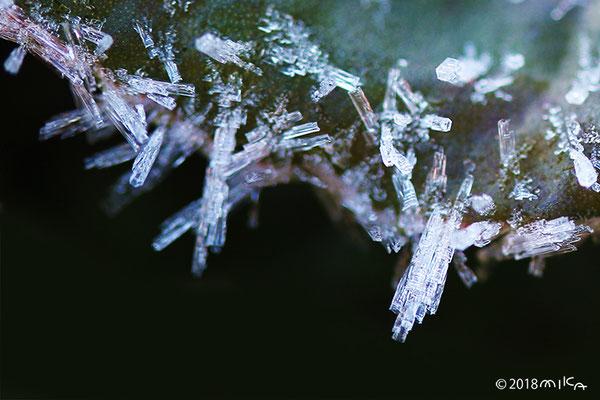 柱状の霜の結晶