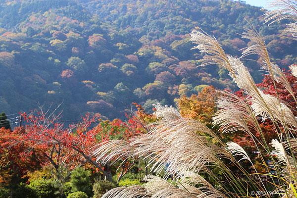 色づく山々にススキ