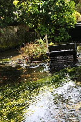 地蔵川(梅花藻の咲く清流)