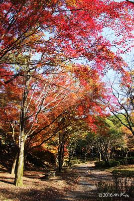 宝ヶ池公園(11月)②