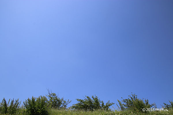 青空の草むら