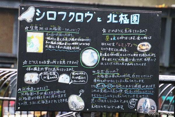 シロフクロウの説明(旭山動物園)