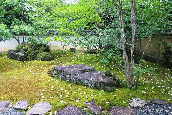 東林院の沙羅双樹の庭