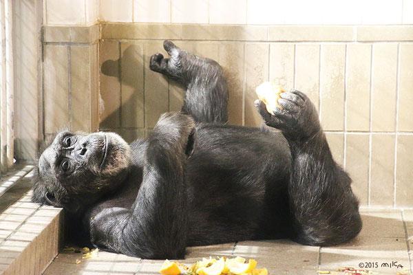 手足でエサを食べるチンパンジー(神戸市立王子動物園)