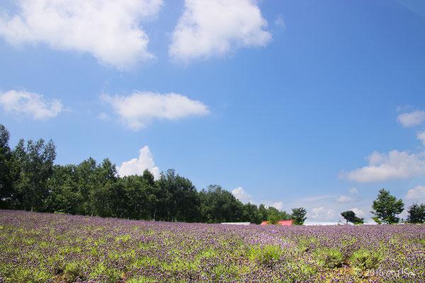 ラベンダーの丘(四季彩の丘)