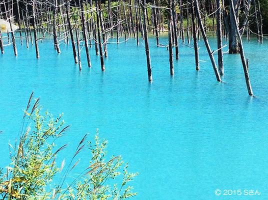 「青い池」大阪府Sさん