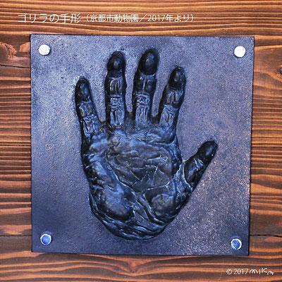 ゴリラの手形(京都市動物園)