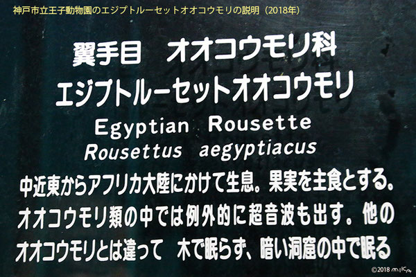神戸市立王子動物園のエジプトルーセットオオコウモリの説明