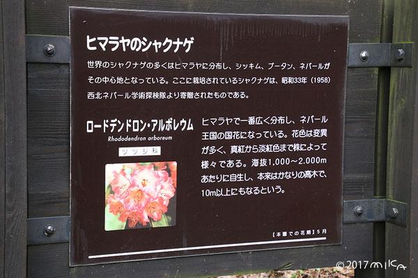 六甲高山植物園の看板(ヒマラヤのシャクナゲの説明)