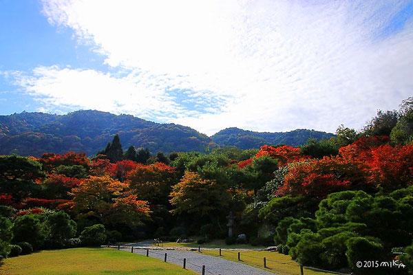 大乗閣前庭の回遊路大河内山荘の庭園(色づき始め 11月上旬)