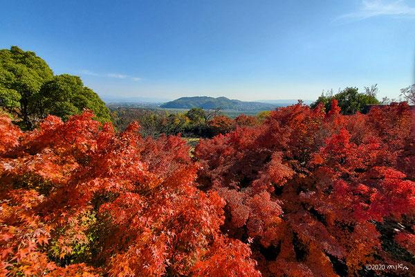 天王山の紅葉