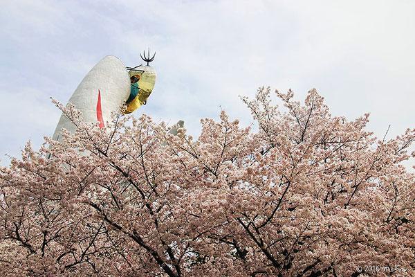 万博記念公園の太陽の塔(桜まつりにて)