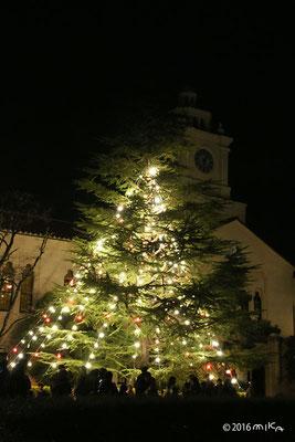 クリスマスツリー(関西学院大学)