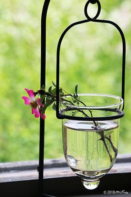 涼しげな花瓶
