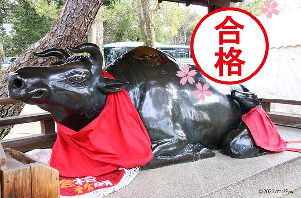 合格祈願の牛の像(北野天満宮)