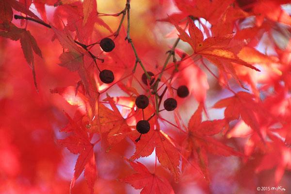 境内の紅葉(大根炊きの日)