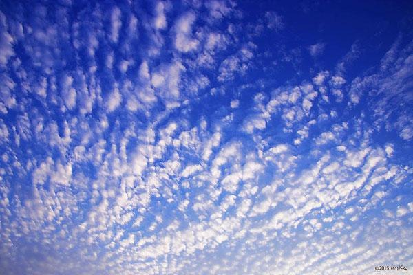うろこ雲(巻積雲)