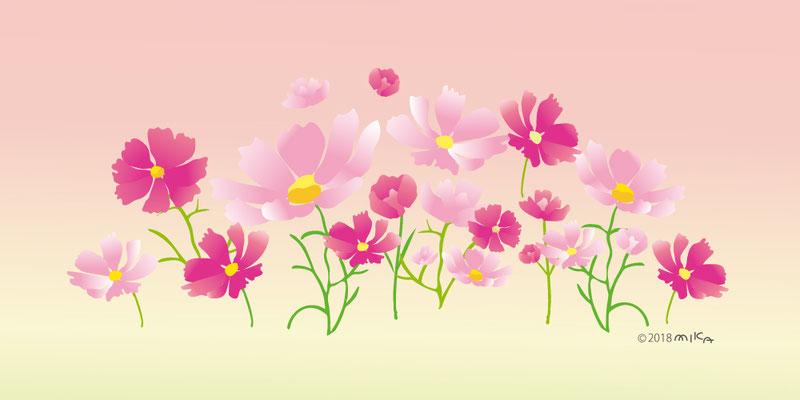 コスモスの花畑(背景ピンク)