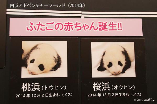 白浜アドベンチャーワールドでパンダにふたごの赤ちゃん誕生(桜浜と桃花)2014年