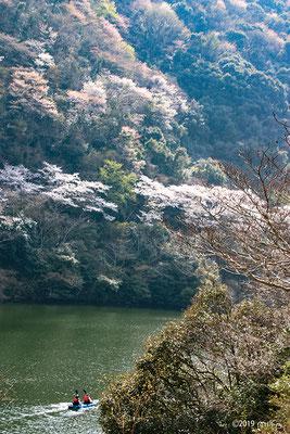 カヌーでお花見②(諭鶴羽ダム)
