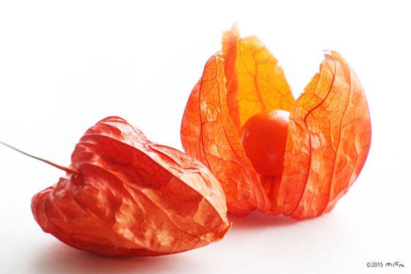 ① 熟した実を選んで 袋をやぶきます