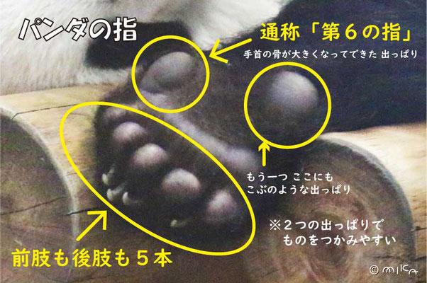 パンダの指の説明