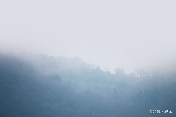 霧雨の山(大阪府能勢町/穀雨の頃)