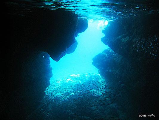 青の洞窟とリュウキュウハタンポ(伊良部島)