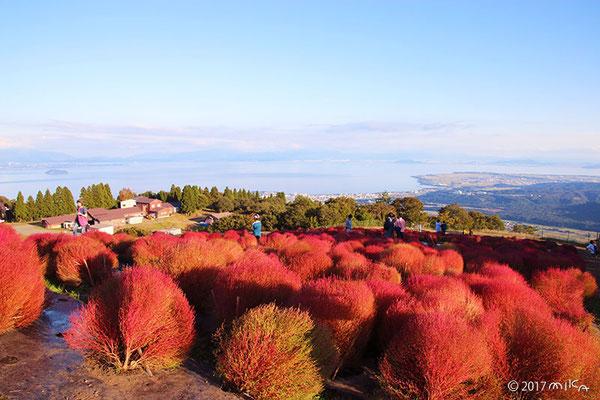 函館山コキアパーク