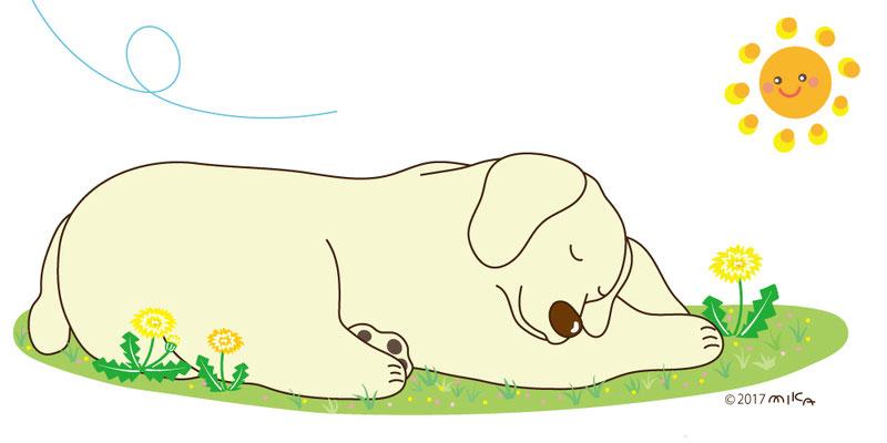 春一番のおひるね犬