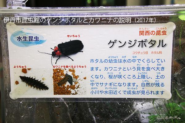 ゲンジボタルとカワニナの説明(伊丹市昆虫館)