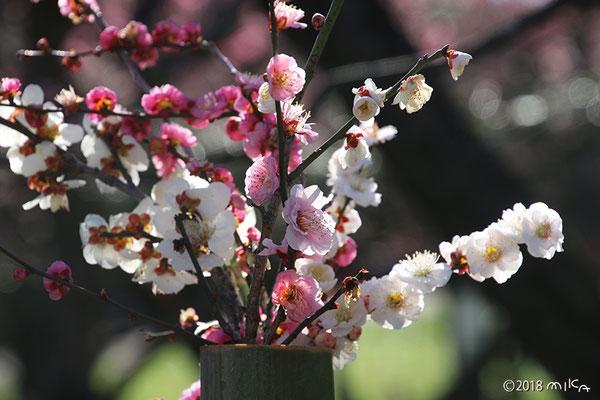 梅の生け花