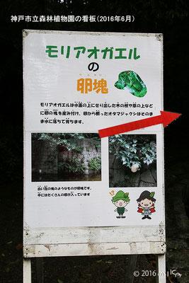 モリアオガエルの看板(神戸市立森林植物園)