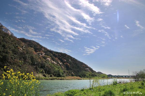山桜の咲く川辺