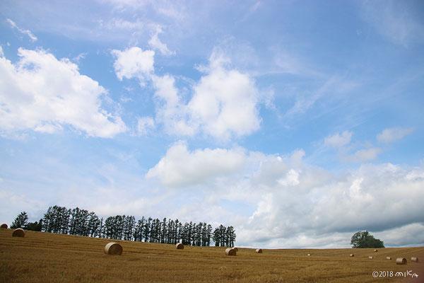 マイルドセブンの丘(麦稈ロールの風景)