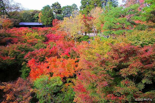 通天橋より隁月橋を眺める(東福寺)