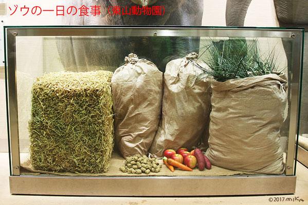 ゾウの一日の食事(東山動物園/2017年)