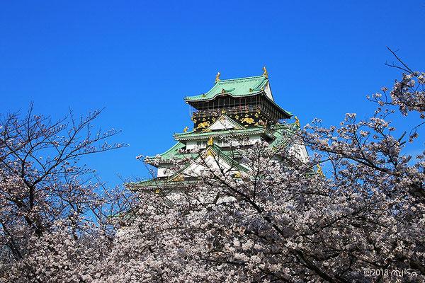 桜咲く西の丸庭園より天守閣