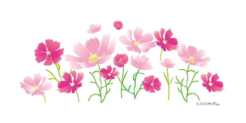 コスモスの花畑(背景白)