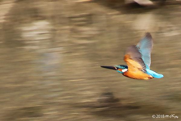 鳥の写真集