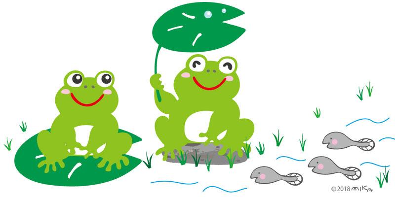カエルとオタマジャクシのイラスト
